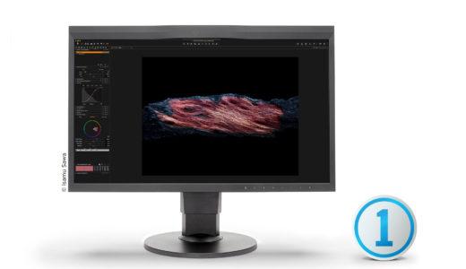 Monitor calibration made easy